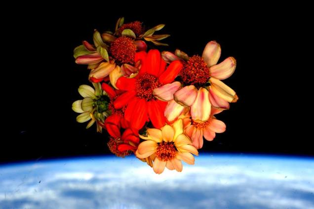 Flowers frown in Space by Scott Kelly ISS - Feb 2016
